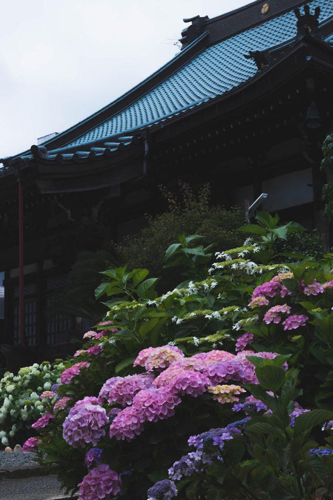 紫陽花と誓欣院2