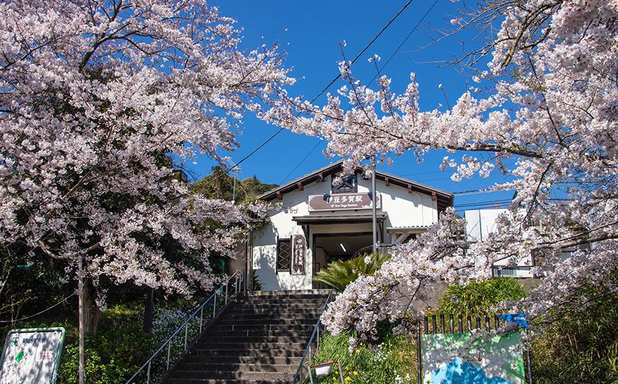 伊豆多賀駅前の桜