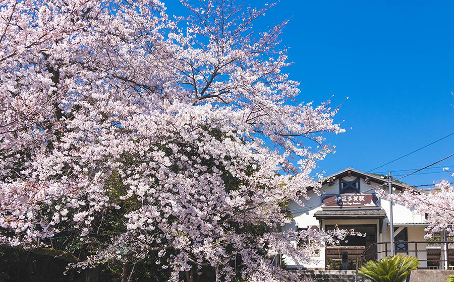 伊豆多賀駅の春の様子