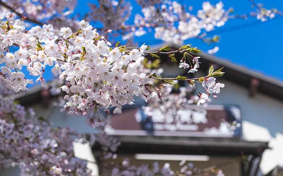 伊豆多賀駅桜イメージ