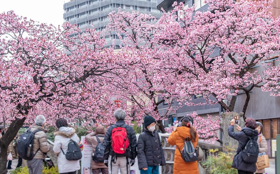 糸川桜まつりの様子