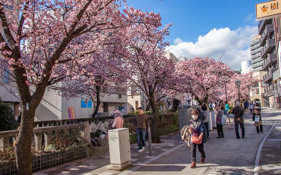 糸川桜まつり開催中の様子